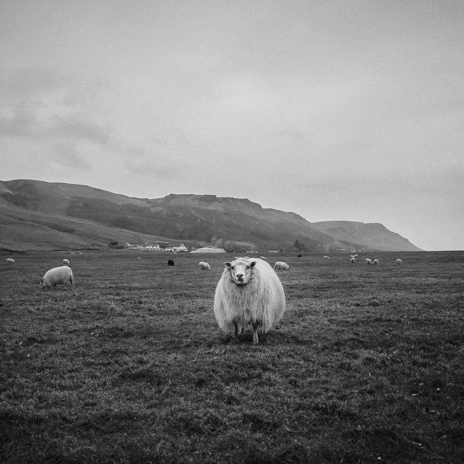 73Travel-Photographer_-Iceland_1Ring-Road_